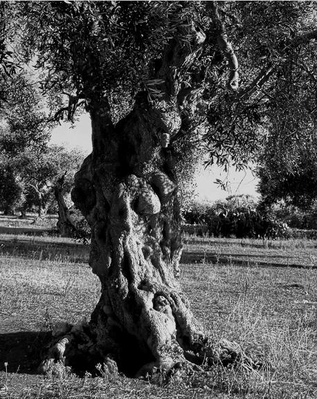Средиземноморская  кухня – Borges НАША ИСТОРИЯ