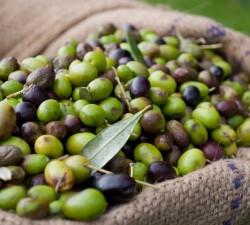 Borges Russia - Что такое купаж оливкового масла?